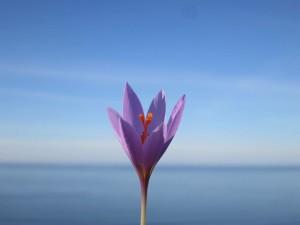flor-mar