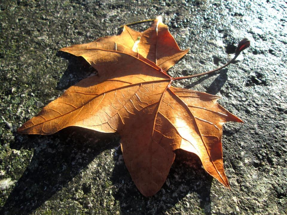 Enseñanzas de otoño